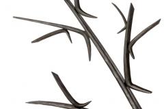 77-tree2_w-bird_detail_branches-800x600